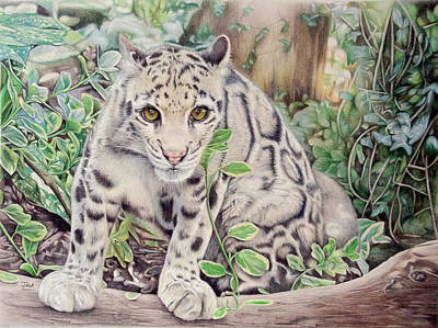 Endangered Drawing - Hidden In Plain Sight - Clouded Leopard by Jill Parry