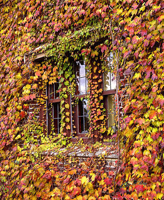 Photograph - Hidden In The Maylake Ivy by Ed Cilley