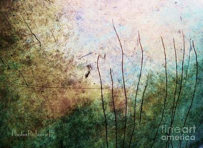 Photograph - Hidden In The Reeds by Jamie Johnson