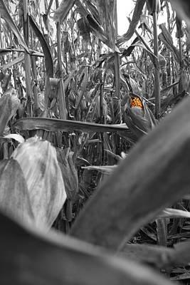 Photograph - Hidden Kernels by Dylan Punke