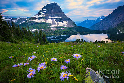 Asters Photograph - Hidden Lake by Inge Johnsson