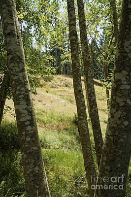 Photograph - Hidden Meadow by John  Mitchell