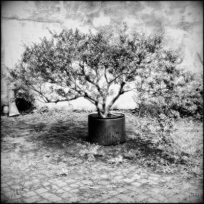 Photograph - Hidden New Orleans Garden by Louise Kumpf