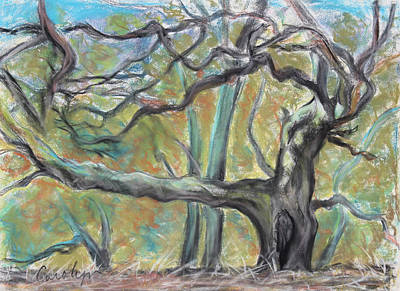 Painting - Hidden Oak And Canyon In Briones Park by Asha Carolyn Young
