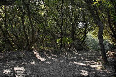 Photograph - Hidden Pathway by Erika Fawcett