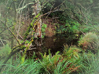 Photograph - Hidden Pond In The Forest by Joyce Dickens