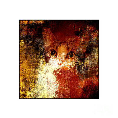 Andee Design Puss Photograph - Hidden Square White Frame by Andee Design