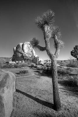 Joshua Tree Np Photograph - Hidden Valley Joshua by Peter Tellone