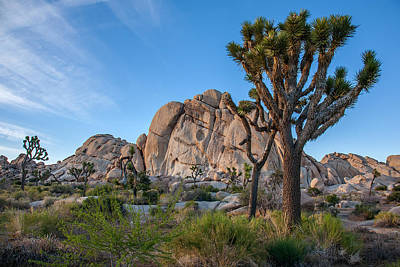 Joshua Tree Np Photograph - Hidden Valley by Peter Tellone