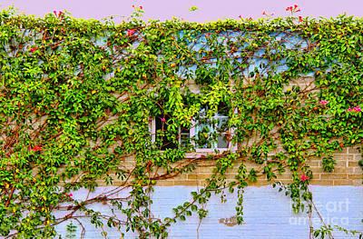 Photograph - Hidden Window By Diana Sainz by Diana Raquel Sainz