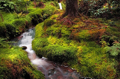 Photograph - Hidden Woodland Corner. Benmore Botanical Garden. Scotland by Jenny Rainbow