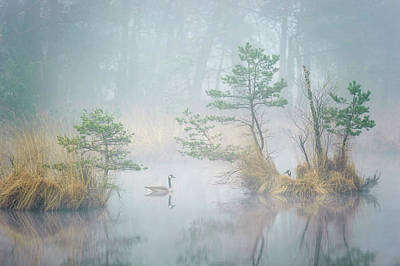 Geese Wall Art - Photograph - Hide And Seek by Andrew George