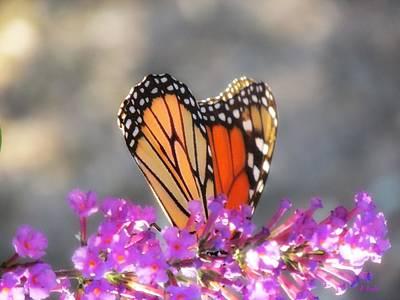 Butterlfy Digital Art - Hide And Seek Butterfly by Alec Drake