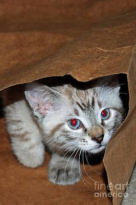 Digital Art - Hide And Seek Kitten 1 by Eva Kaufman