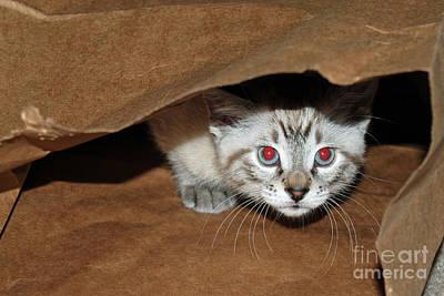 Pop Art - Hide and Seek Kitten 2 by Eva Kaufman