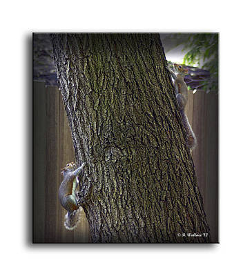Hide And Seek Squirrels Print by Brian Wallace