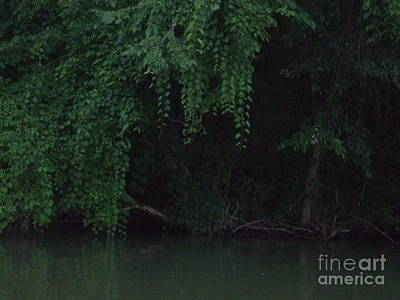 Photograph - Hide In The Darkness Of The Trees by Deborah DeLaBarre