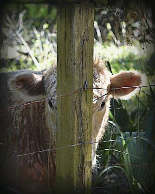Photograph - Hide N Seek Bull by Sheri McLeroy