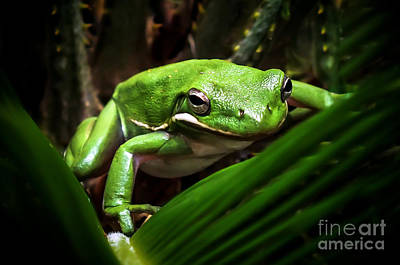 Going Green Photograph - Hide N Seek by Karen Wiles