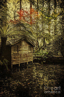 Photograph - Hideaway by Andrew Paranavitana