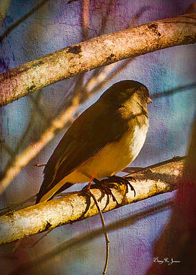 Photograph - Bird - Perched - Hiding by Barry Jones