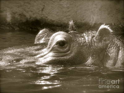 Photograph - Hiding Hippo by Sherri Williams