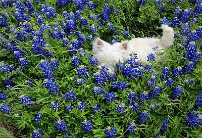 Digital Art - Hiding In The Bluebonnets by Carrie OBrien Sibley