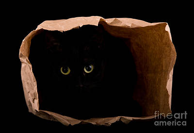 Hiding In The Paper Bag Art Print