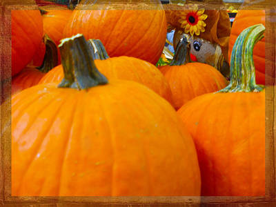 Photograph - Hiding In The Pumpkin Patch by Judy Hall-Folde