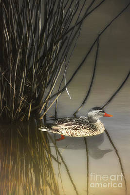 Hiding In The Reeds Art Print