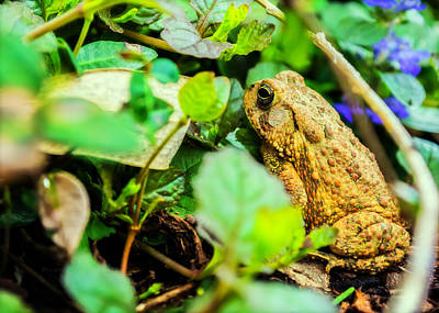 Frog Photograph - Hiding Out by Jon Woodhams