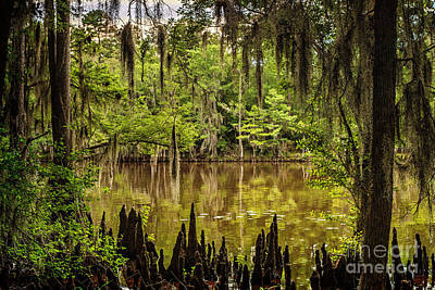 Photograph - Hiding On Caddo Lake by Tamyra Ayles