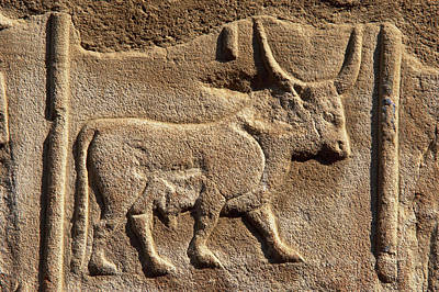 Egyptian Art Photograph - Hieroglyphic Writing by Prisma Archivo
