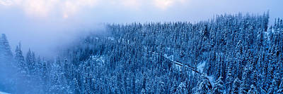 High Angle View Of A Forest, Mt Baker Art Print by Panoramic Images