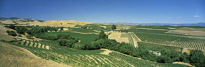Winemaking Photograph - High Angle View Of A Vineyard, Carneros by Panoramic Images