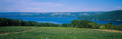 Finger Lakes Photograph - High Angle View Of A Vineyard by Panoramic Images