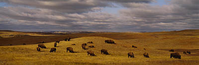 Clouds Over Pasture Photograph - High Angle View Of Buffaloes Grazing by Panoramic Images