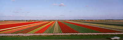 High Angle View Of Cultivated Flowers Print by Panoramic Images