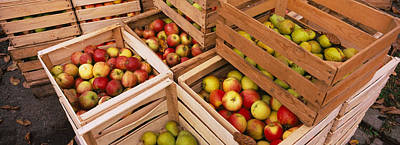High Angle View Of Harvested Apples Art Print by Panoramic Images