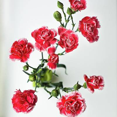 High Angle View Of Red Carnations Art Print by Kateryna Kyslyak / Eyeem