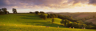 Pasture Scenes Photograph - High Angle View Of Sheep Grazing by Panoramic Images