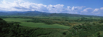 High Angle View Of Sugar Cane Fields Art Print