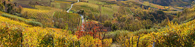 High Angle View Of Vineyards, Alba Art Print by Panoramic Images