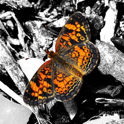 Beauty In Nature Digital Art - High Contrast Vibrant Orange Spotted Butterfly Closeup Macro Color Splash Digital Art by Shawn O'Brien