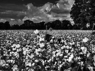 Boll Photograph - High Cotton 002 Bw by Lance Vaughn