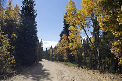 Photograph - High Country Autumn Dirt Road by James BO Insogna