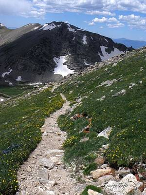 Photograph - High Country Path by George Tuffy