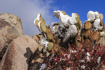Succulent Photograph - High Desert Snow 1 by Scott Campbell
