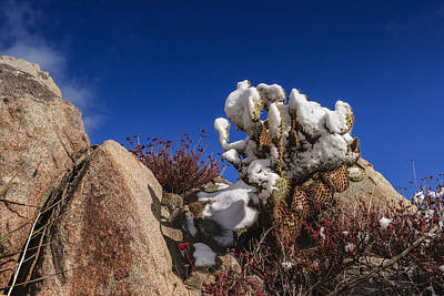 Photograph - High Desert Snow 2 by Scott Campbell