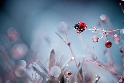 Ladybug Photograph - High Diving by Fabien Bravin